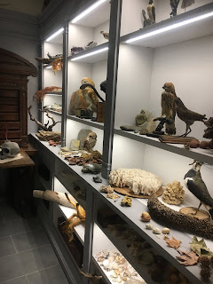 ピサ植物園の植物博物館の剥製