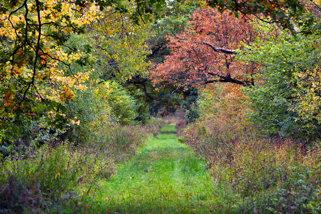 Cambridgeshire woodland in autumn colour