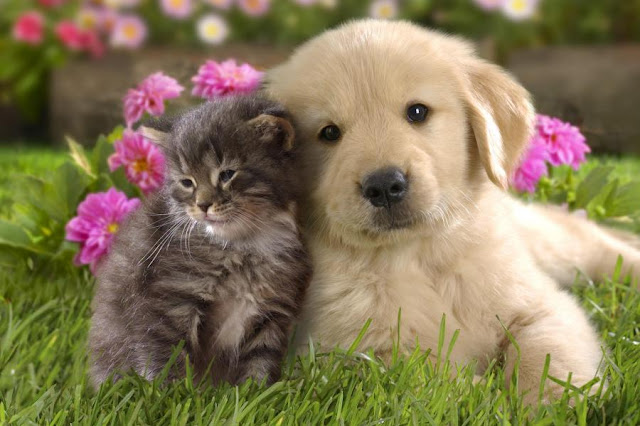 Qual o melhor animal de estimação para as crianças; Cão ou Gato