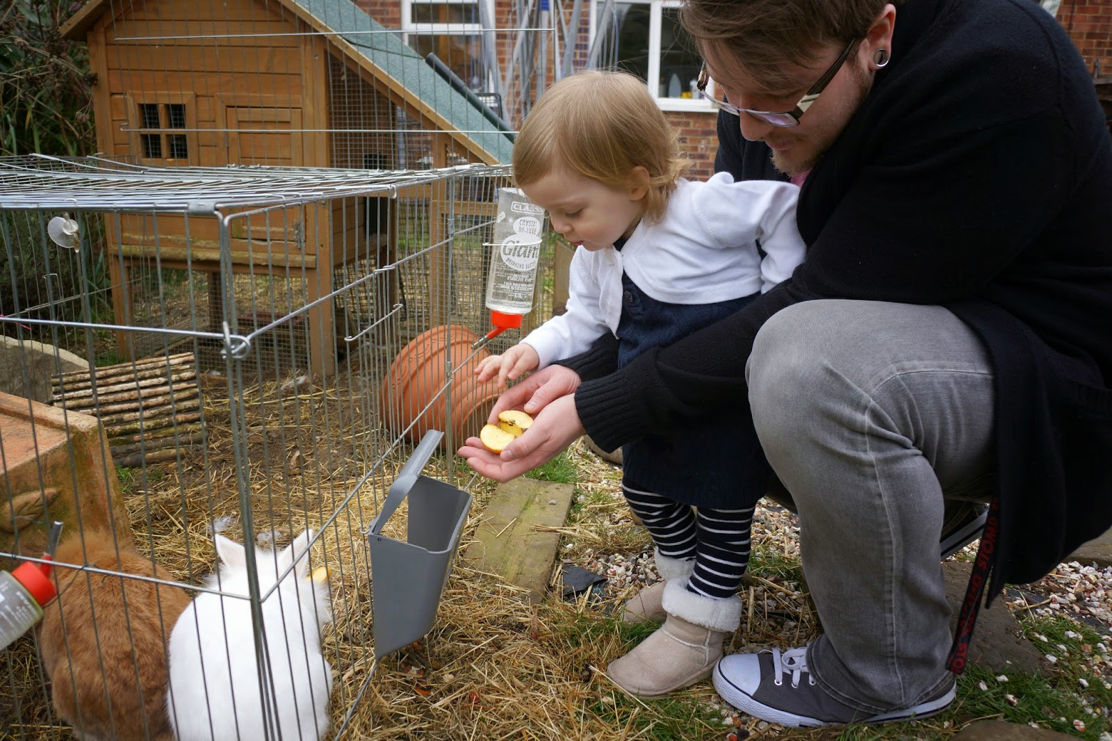 toddler feeding rabbits with dad