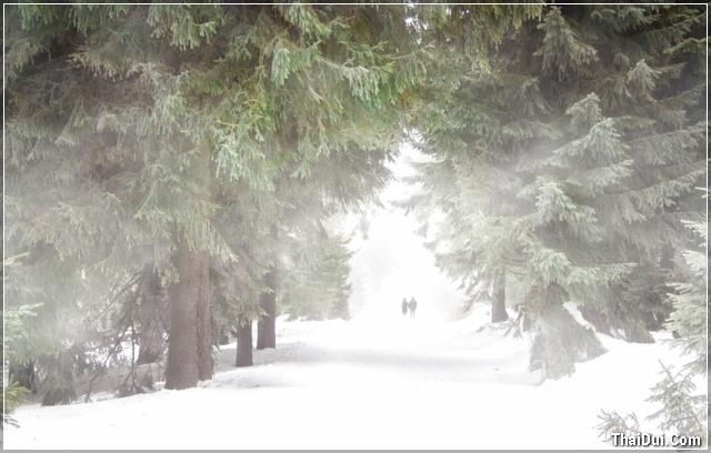 ảnh đôi tình nhân đi dưới trời mùa đông