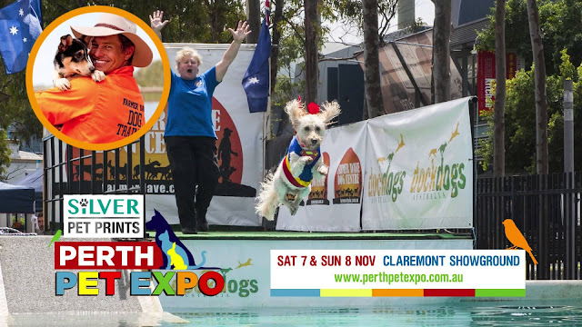 Perth-Pet-Expo-2015-Dockdogs