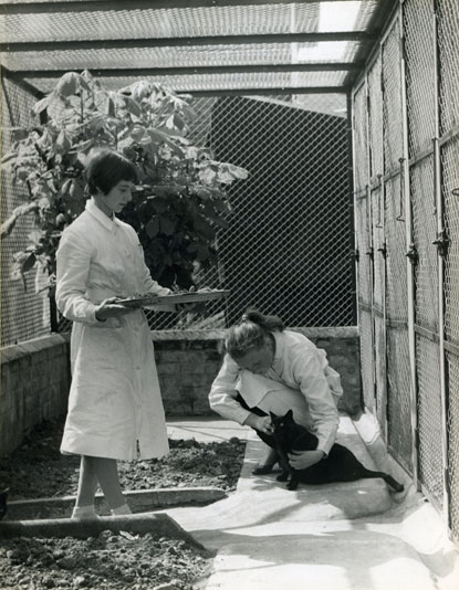 Cats Protection outdoor pens in 1960s