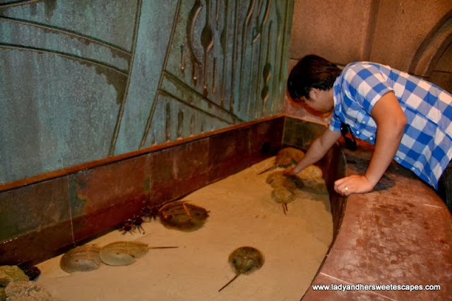Ed and the horseshoe crabs at the Lost Chambers