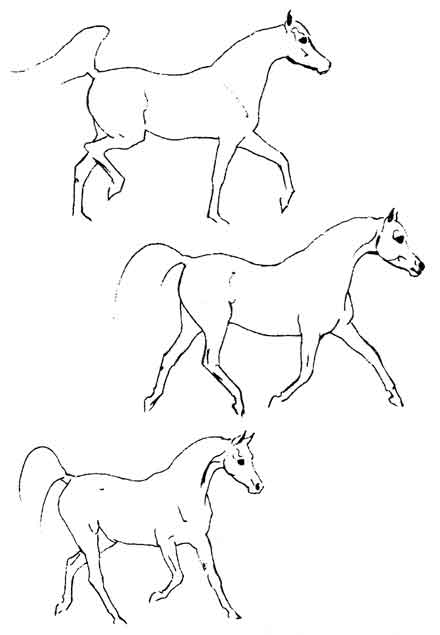 Delighted Horses Horses Gaits