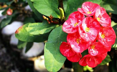 Foto Macro Bunga Yang Cantik