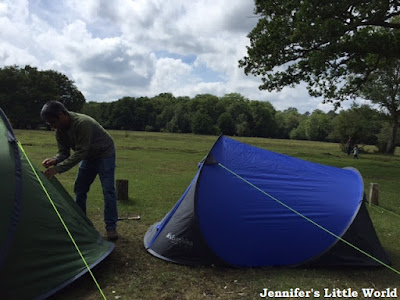 Pitching a tent in the New Forest camping