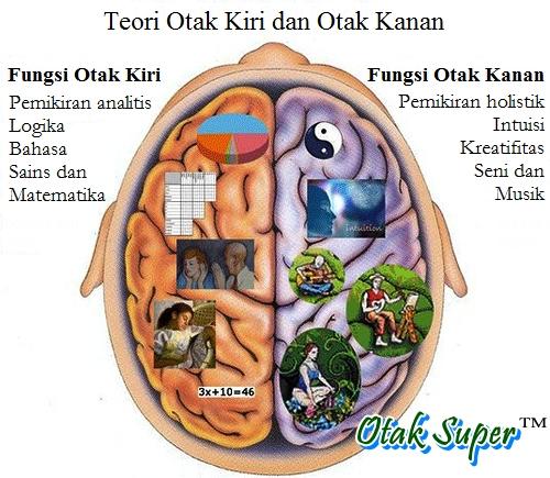 perbedaan fungsi otak kanan dengan fungsi otak kiri