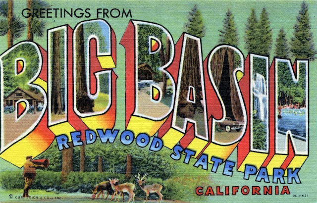 1950. Big Basin Redwoods State Park, California
