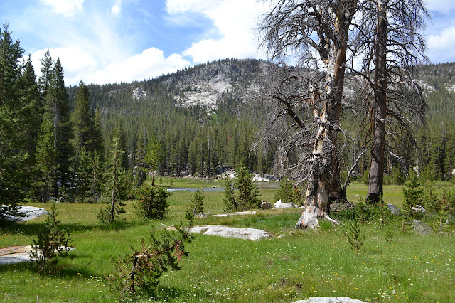more meadows between the trees