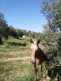 el-burgo-sierra-de-las-nieves-malaga-turismo-rural-rutas-caballos