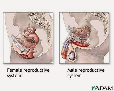 Ass and vagina before in mouth