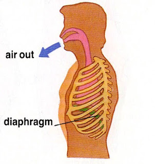 Respiratory System For Kids - How do we breathe