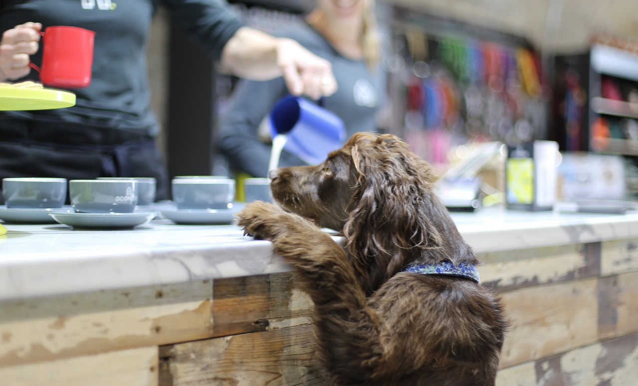The Best Dog Friendly Cafes