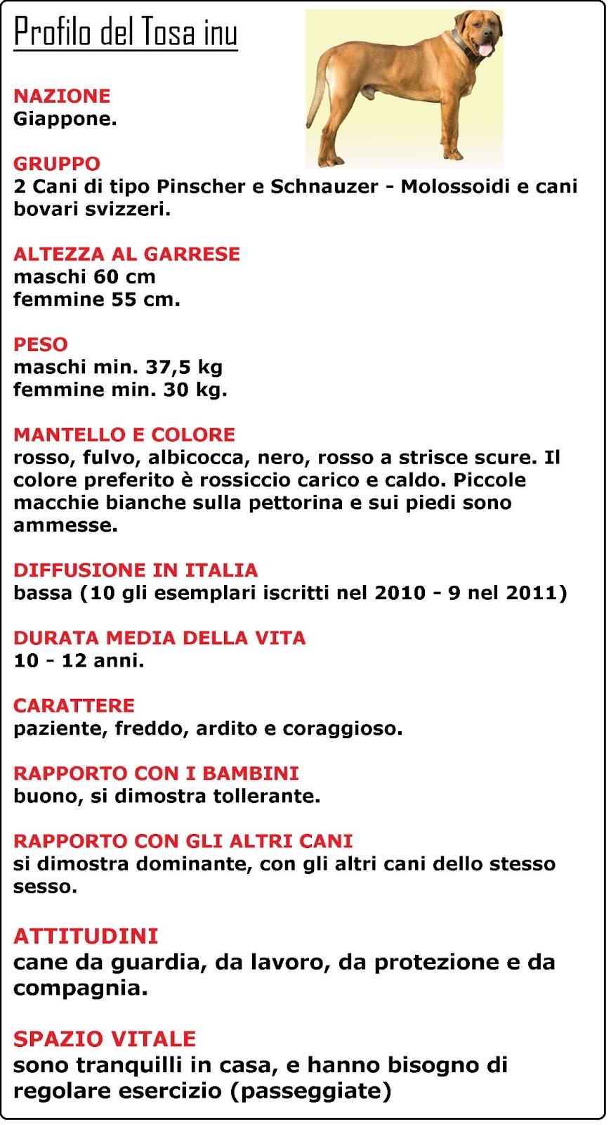 Immagini Cagnolini Piccoli