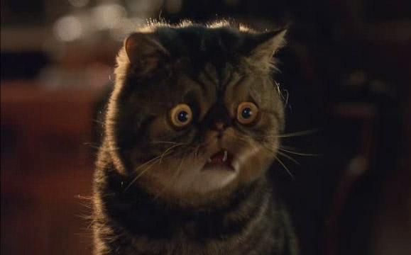 Cats Edgar Chat Ferrovi Ef Bf Bdre