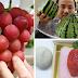Buah-buahan Ini Dibentuk Sejak Kecil, Harganya Bisa Selangit Lho