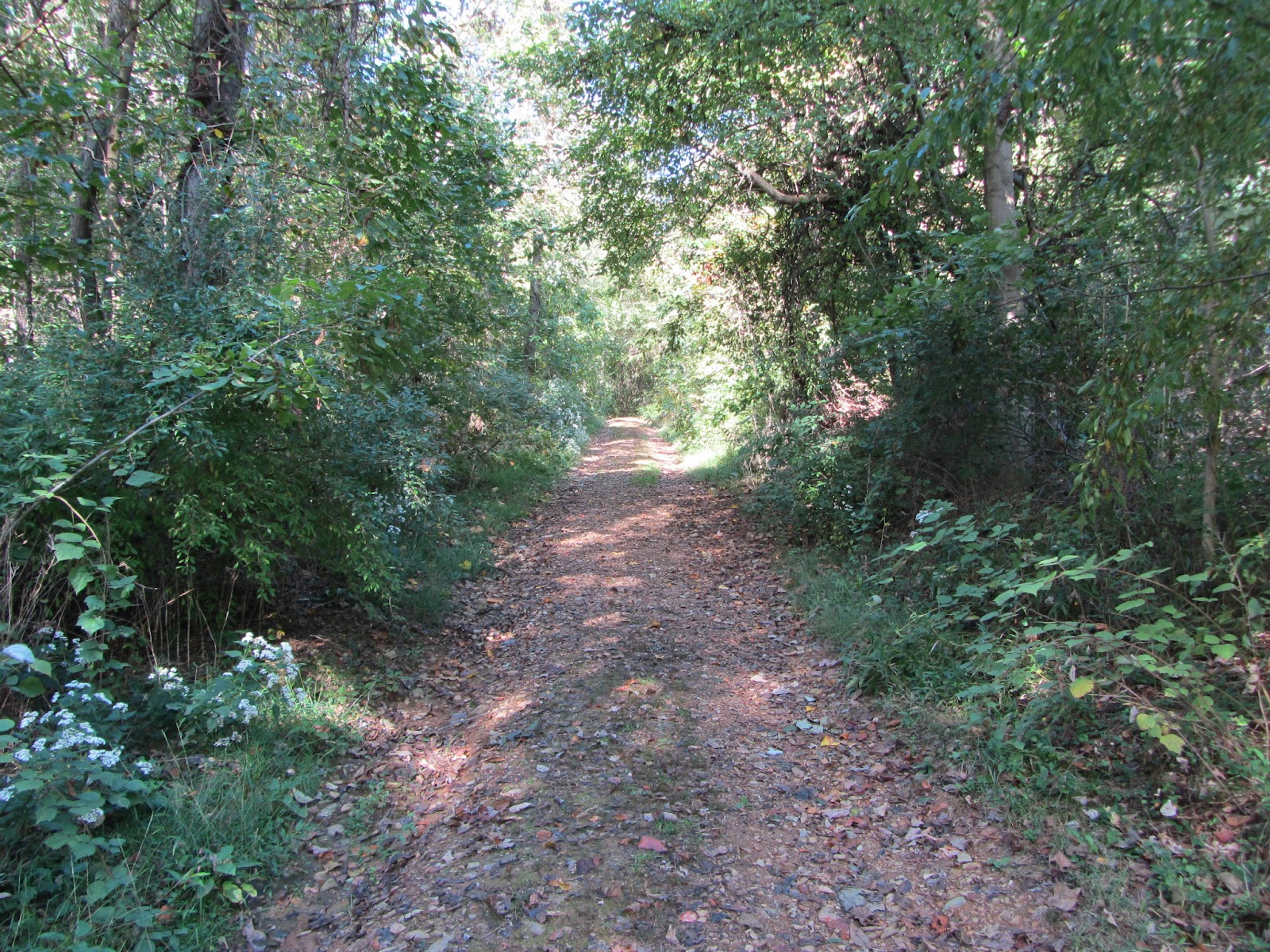 Wide dirt trail through the woods