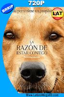 La Razon De Estar Contigo (2017) Latino HD 720p - 2017