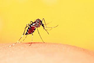 foto do mosquito aedes