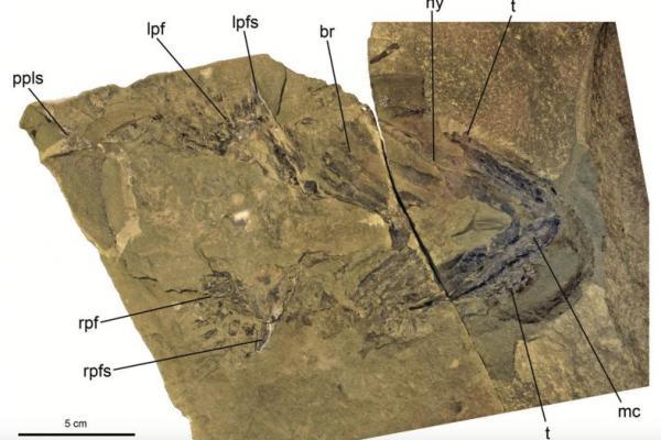 New study identifies ancient shark ancestors