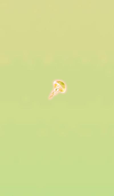 Jellyfish spirit yellow orange