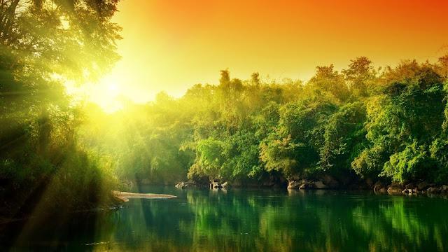 Hình nền cây và nước