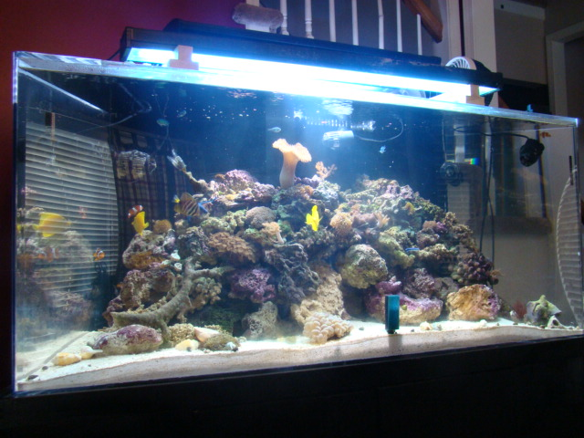 online kansas city best places to buy saltwater fish and