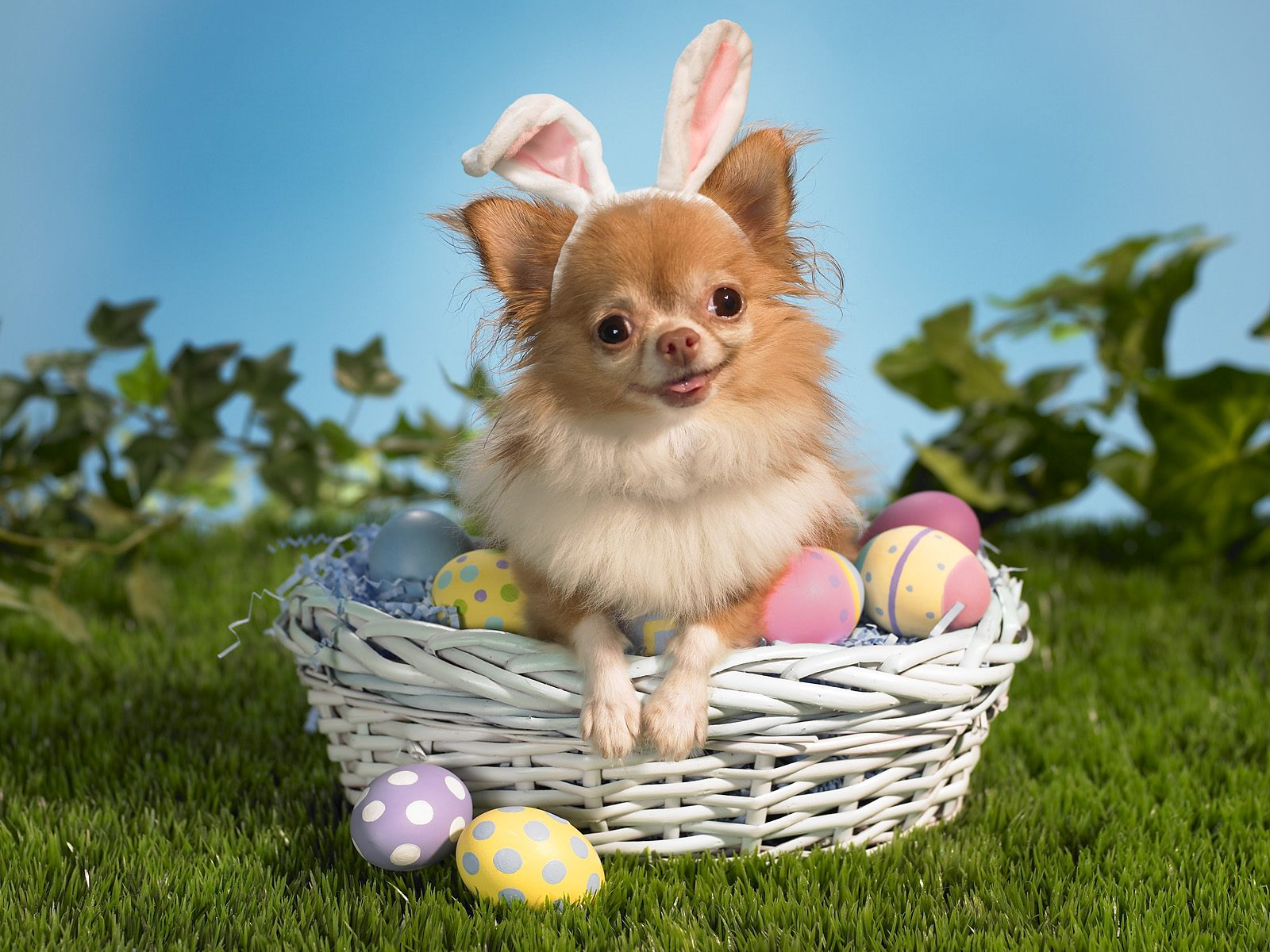 Funny Easter doggy picture 2021