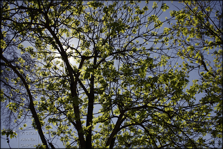 fotografía, naturaleza, Valencia, contraluz, ramas, hojas, árbol