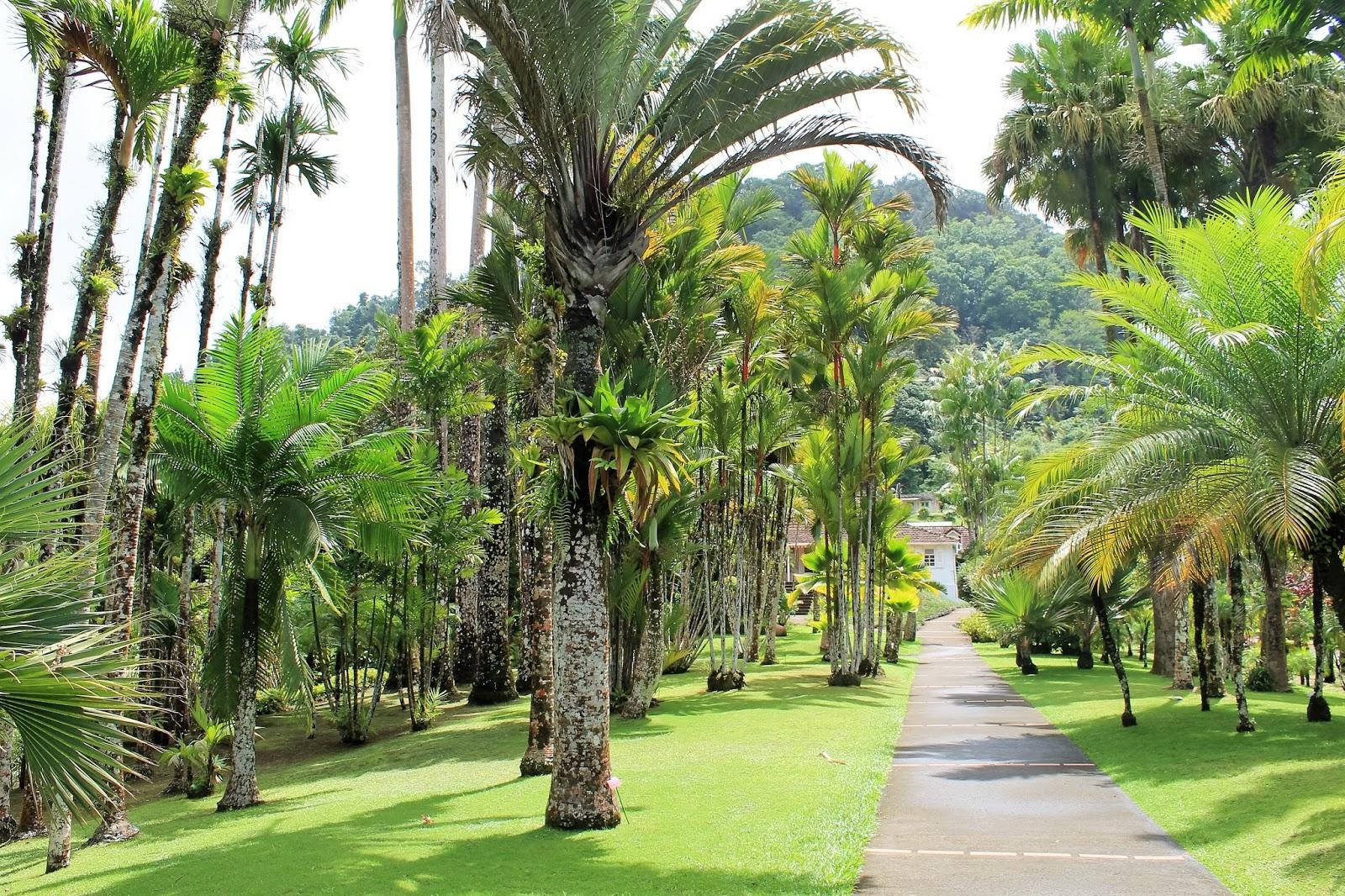jardin de balata martinique palmeraie