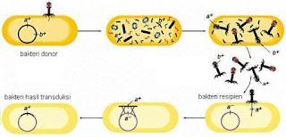 transduksi bakteri
