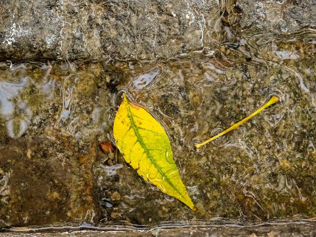 Foto artística,una hoja,un tallo y suelo mojado forman la imagen.