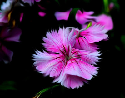 Blumen, flores, Flower, fleurs, květiny, Flores, blomme, blommor, çiçekler, kwiaty, Flor, Hoa, nở hoa, floración, bloom, Kukka, kukinta, La floraison, Fiore, Cvjetni, cvatu, Цвет,   Bloem, bloei, Цветок, цветение, Kvetina, kvet, Çiçek, Virág,