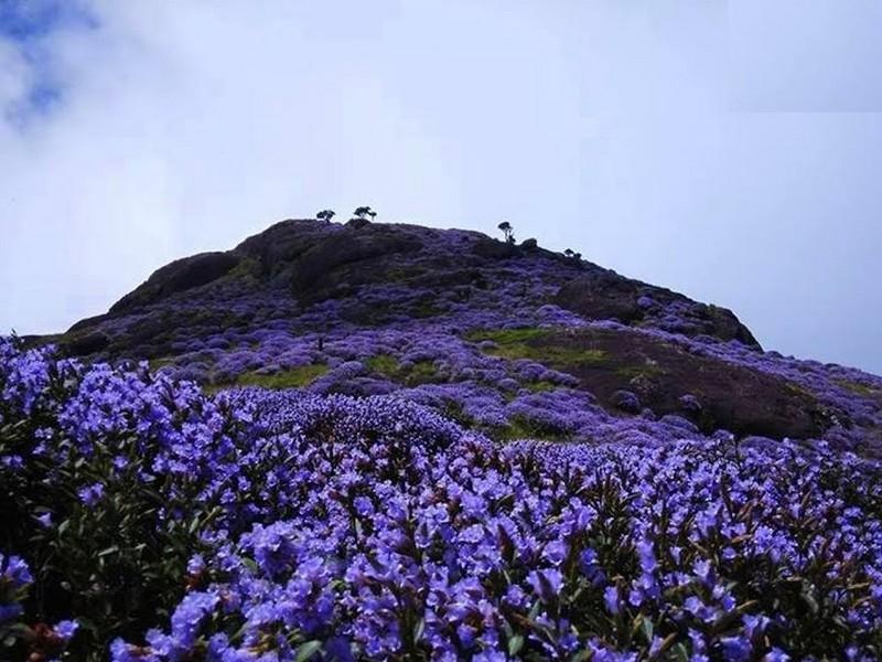 Munnar Itinerary - Eravikulam National Park