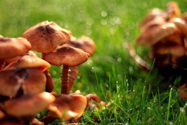 close up of mushrooms in the grass, raindrops