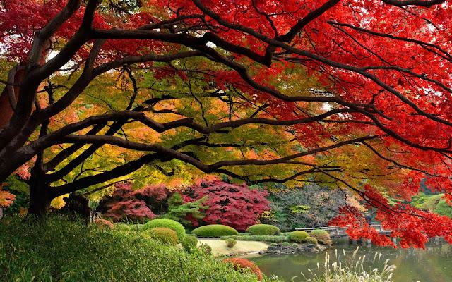 Herfst in Tokio Japan
