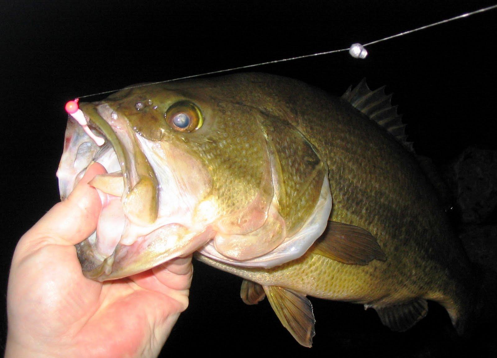 Saltwater Dogfish