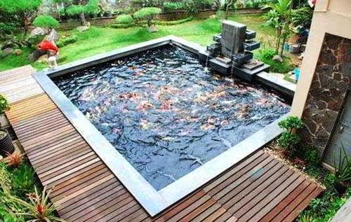 tips-menata-kolam-ikan-kecil-dekat-teras-rumah