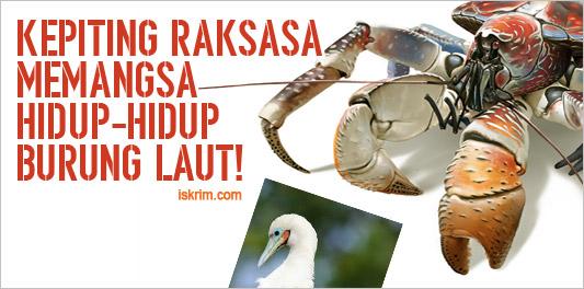 http://www.iskrim.com/2017/11/astaga-video-detik-detik-kepiting.html