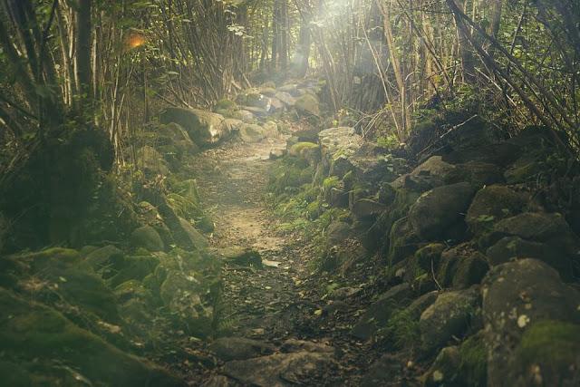 forest zz