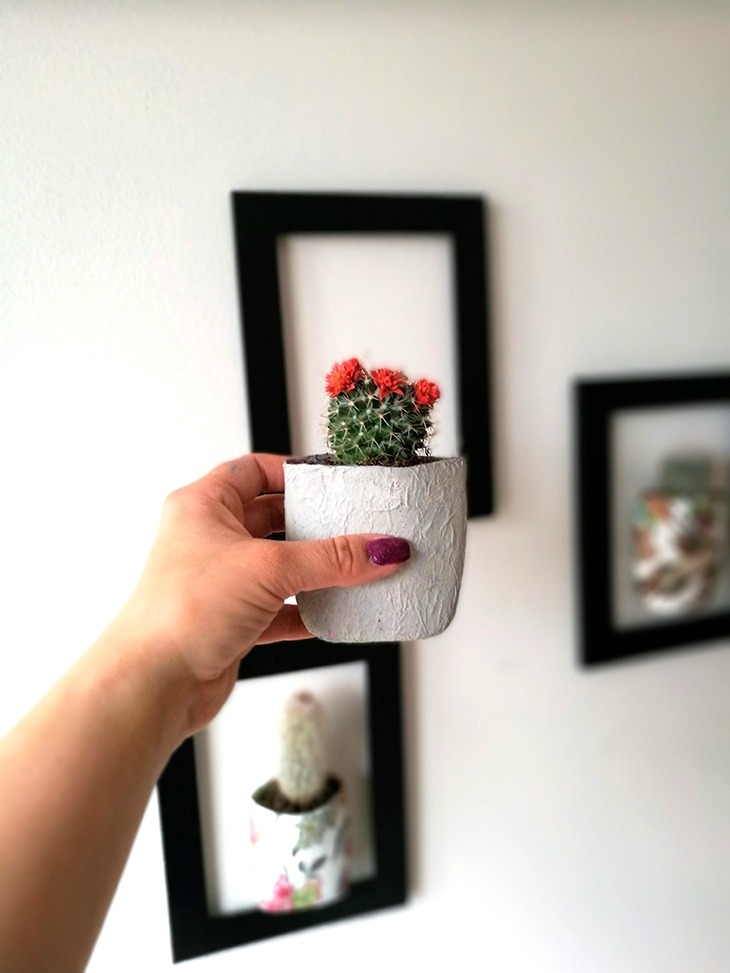kaktustaskut