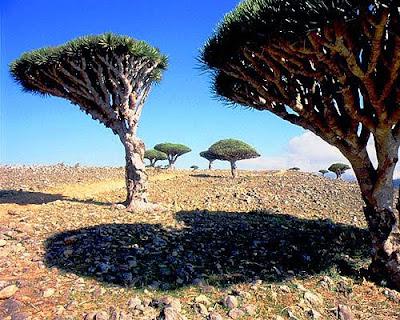 熱搜網: 索科特拉島 Socotra