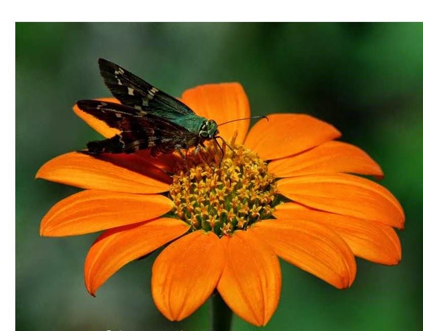 fotografias de mariposas posadas en flores
