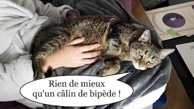 Kikko, gentil chat sur des genoux de bipède.