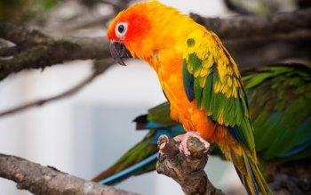 Wallpaper: Parrot