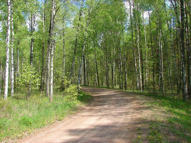 Лес на Словечанско-Овручском кряже