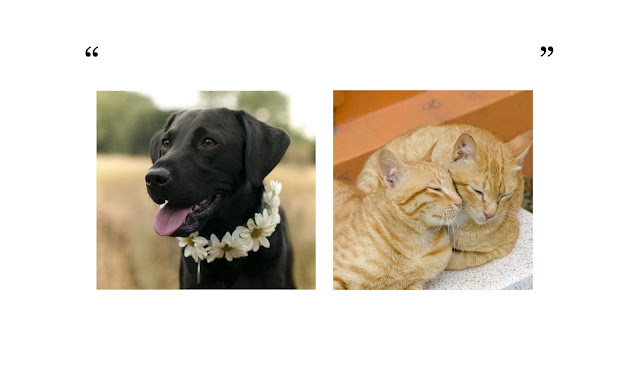 Talk about cats and dogs... Interviews with leading scientists and authors at Companion Animal Psychology