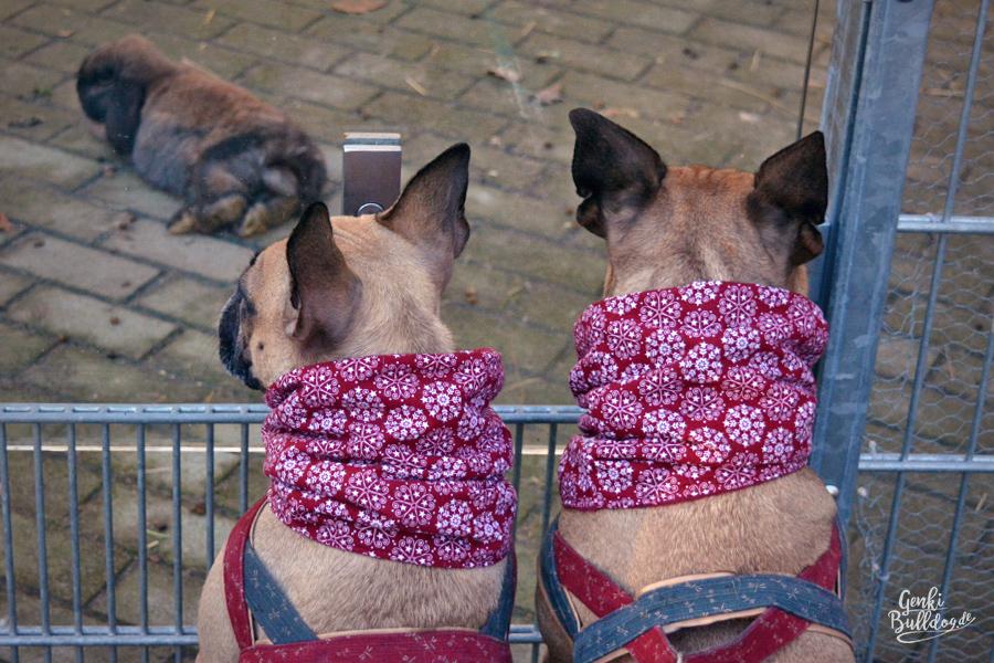 Tierpark Walldorf mit Hund