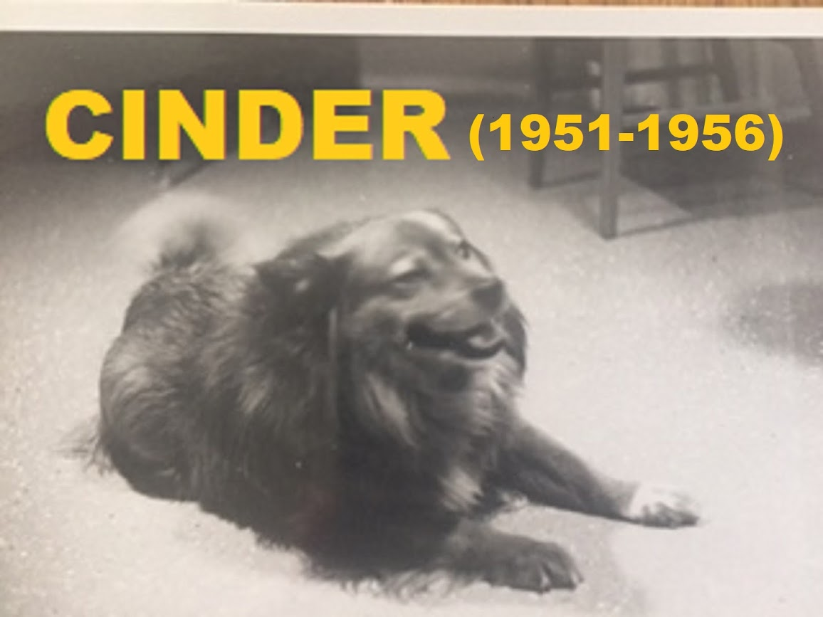 CINDER - MY FIRST GIRL FRIEND WAS A DOG - (1951 - 1956).